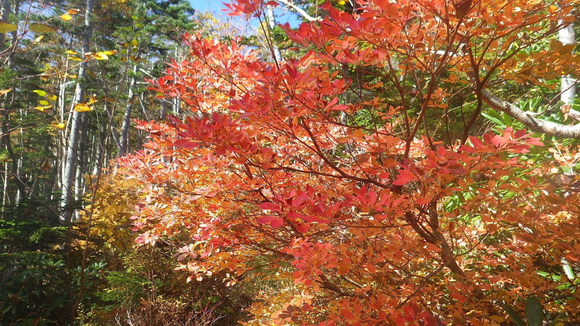 空木岳の紅葉