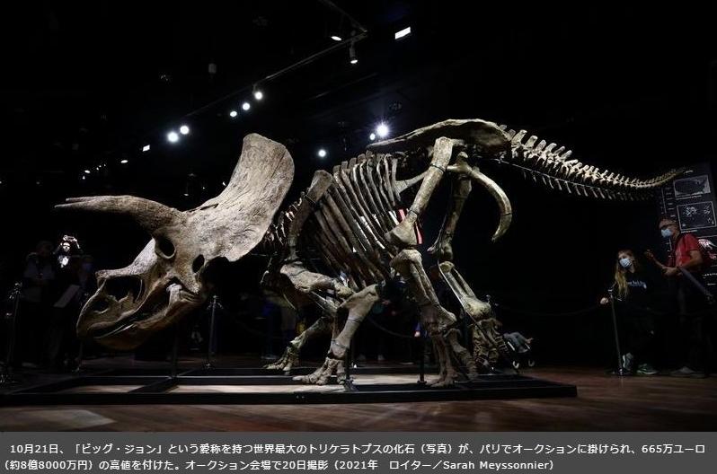 トリケラトプス化石