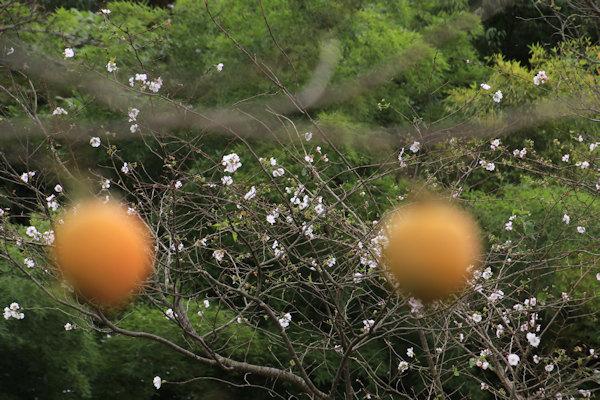 狭山ケ丘の秋 303/2021.10.07