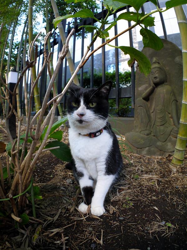 石仏様と黒白猫1