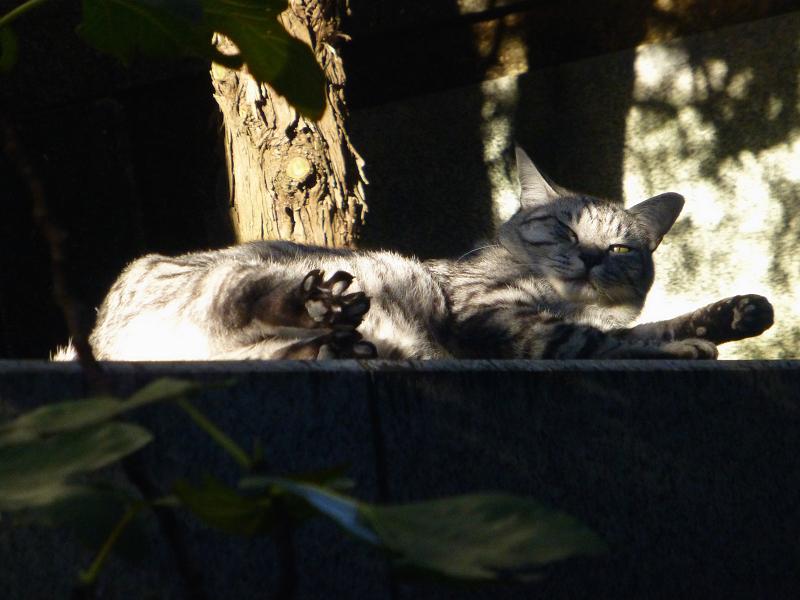 手足が伸びてるサバトラ猫1