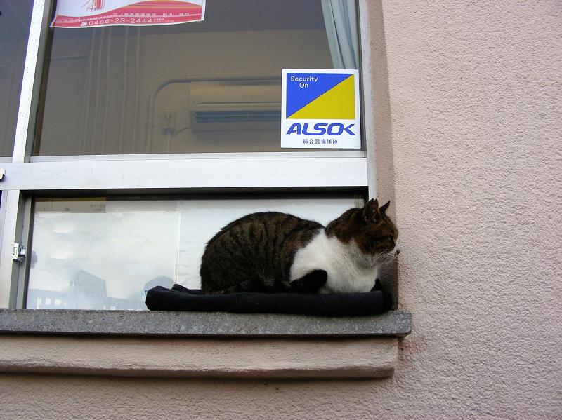 切符売り場とキジ白猫2
