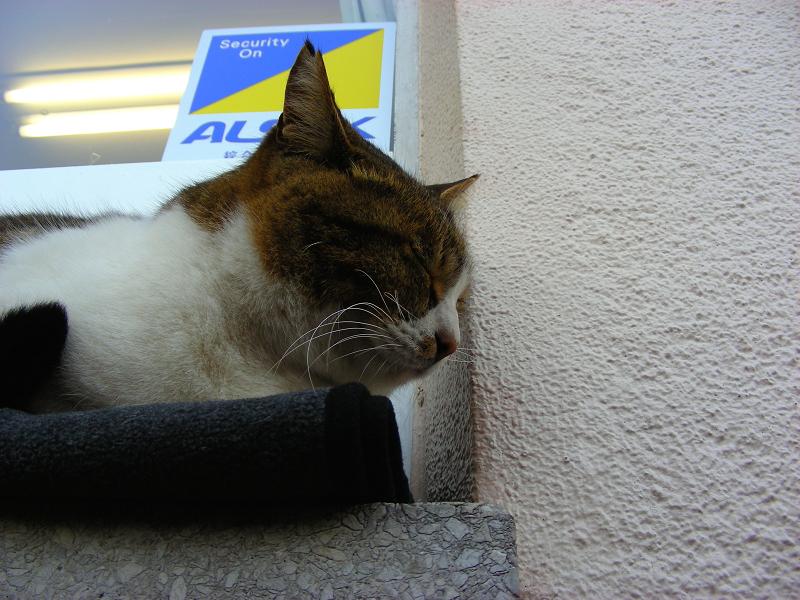 切符売り場とキジ白猫3