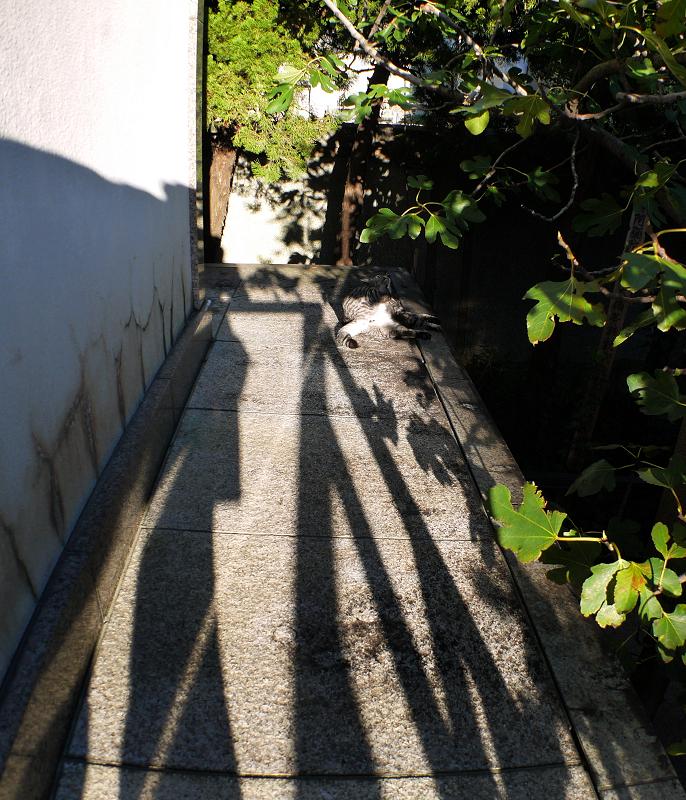 光と影とカキカキなサバトラ猫