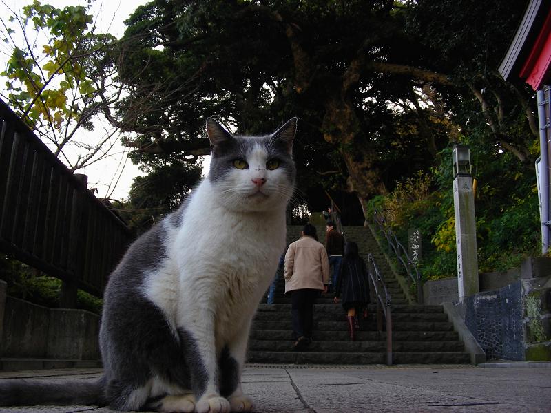 参道に座ってるグレー白猫1