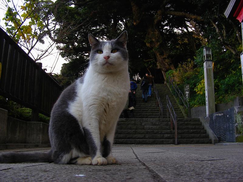参道に座ってるグレー白猫2