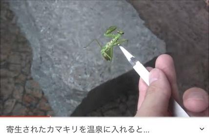 【悲報】大物昆虫系YouTuberさん、熱海の旅館の露天風呂にカマキリを投入して炎上→逆ギレ